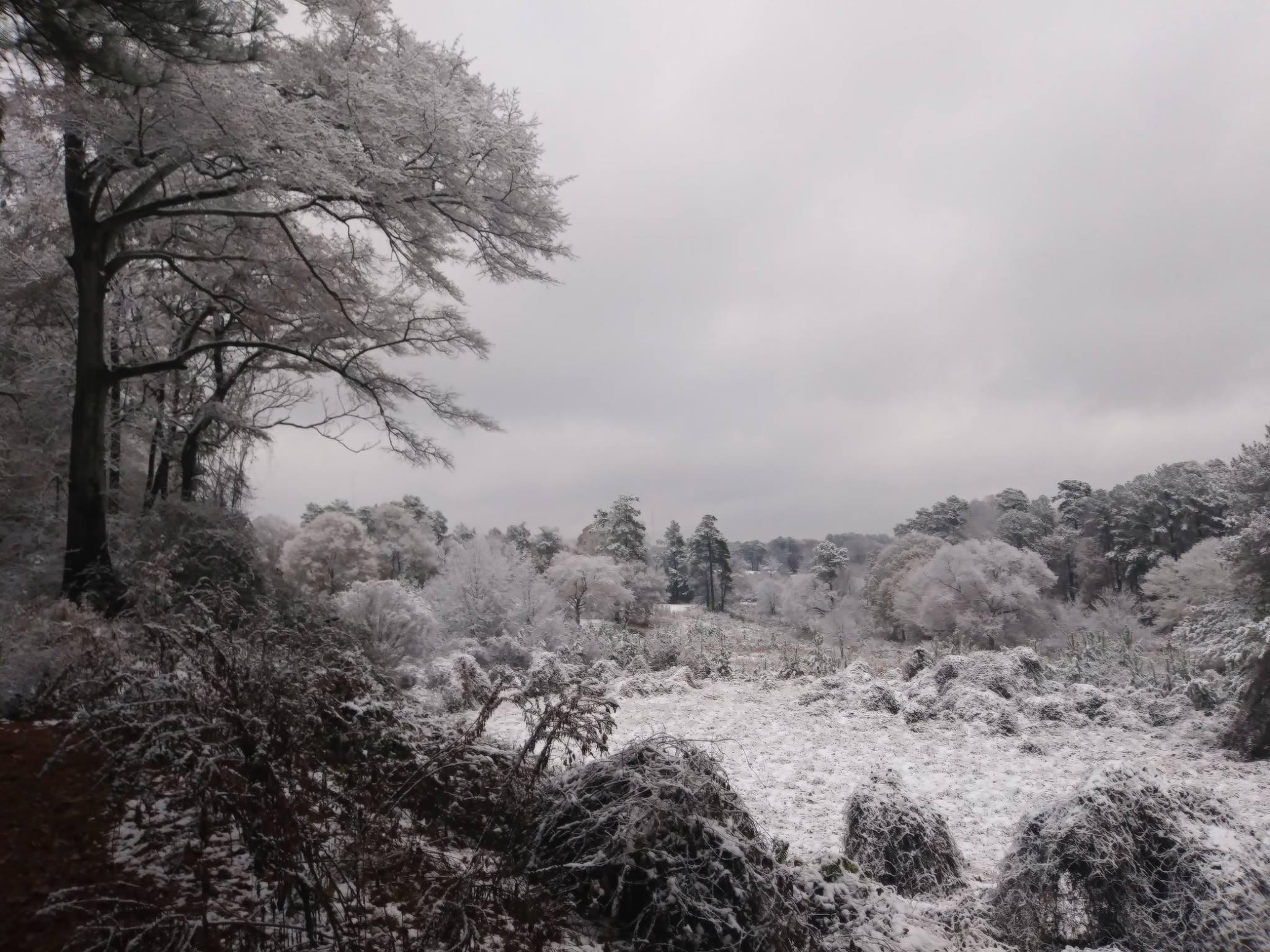 SnowChosewoodPark3